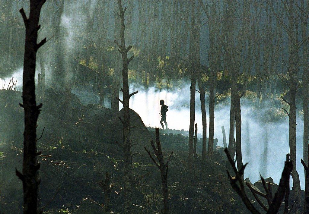 Deforestation West Papua